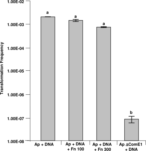 Comparison of the transformation frequency of wild-type A. pleuropneumoniae and ApcomE1.The effect of the presence of Fn on the transformation frequency of wild-type A. pleuropneumoniae was also tested. Bars with different letters are significantly different from each other (one-way ANOVA, P<0.001).