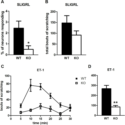 SLIGRL- and ET-1-induced responses are Pirt-dependent.(A) Cellular responses to SLIGRL (130 µM) are fewer in DRG neurons from Pirt−/− mice (n = 5 per genotype). (B) Pirt mutants (n = 11) scratch less than WT mice (n = 13) upon SLIGRL injection (0.1 µmol), but the difference is not statistically significant. (C, D) ET-1 (10 pmol) generates a decreased behavioral response in Pirt KO (n = 10) versus WT (n = 9). * p<0.05, ** p<0.001; two-tailed unpaired t-test.