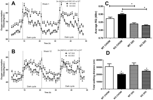 "Oxygen consumption and locomotor activity.(A and B): Oxygen consumption after diet treatment for one week (A) and 12 weeks (B), evaluated over a 48 hour period for wildtype (WT, open circles) and C5aRKO mice (solid circles) on a high fat high sucrose diet-induced obesity (DIO) diet. (C): Respiration quotient (RQ) for the same 48 hour period for WT and C5aRKO mice on CHOW or DIO diet. (D): Total walking distance over the 48-hour period for WT and C5aRKO mice on CHOW or DIO diet. Results are presented as means ± SEM of n = 8 mice per group. For calorimetry results, ""dark cycle"" indicates the active period. Data were analysed by 2-way RM-ANOVA (A and B) and by ANOVA followed by t-test (C and D), where *P<0.05 for C5aRKO vs WT on their respective diets, unless otherwise indicated."