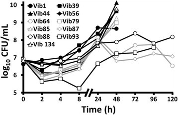 Replication of 11 wild-type Vibrio anguillarum isolates in the haemolymph of Galleria mellonella larvae during 120 h after injection at 0 h with 1 × 105 CFU. Please note that the CFU/mL value at 0 h refers to the PBS inoculum whereas at the other sampling times the CFU/mL value refers to the haemolymph. It was not possible to obtain data for all strains at each sampling time after 48 h because most larvae were already dead and so were not sampled. For comparative purposes, the geometric mean (and standard error) of CFU/mL in haemolymph for Vib1 at 2 h, 4 h, 8 h, 24 h and 48 h was 6.86 (0.10), 6.99 (0.07), 7.40 (0.17), 8.70 (0.15) and 8.64 (0.85), respectively. For clarity, the unmanipulated and uninfected control groups data are not shown. Data points indicate geometric mean; error bars have not be added. n = 4