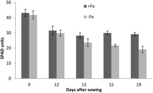 Chlorophyll concentration in barley shoots grown under Fe sufficiency (+Fe) and Fe-deficiency (−Fe) conditions, at 9, 12, 13, 15, and 19 DAS. At 9 DAS the SPAD was measured at the first leaves, thereafter, it was recordered on the second leaves.