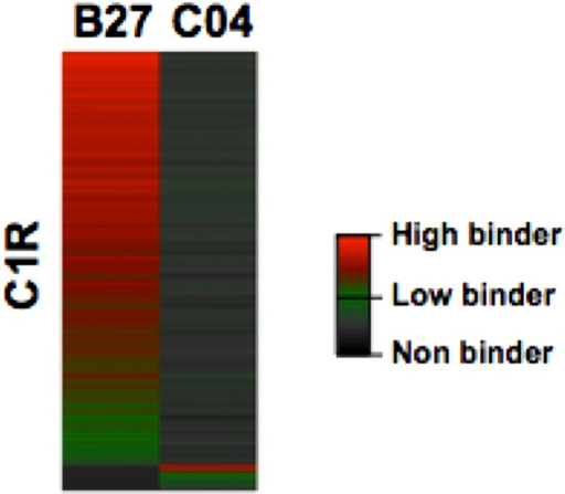 Heat map visualization of HLA-B27 and -C04 peptide ligands isolated from C1R cells.DOI:http://dx.doi.org/10.7554/eLife.07661.033