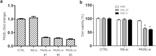 PA28γ silencing induced growth inhibition of OSCC cells. (a) siRNA-003 worked the best among the three strains of siRNA against PA28γ gene expression, illustrated by qPCR, 48 h. (b) MTT assay, 48 h. PA28γ silencing inhibited the survival of OSCC cells (HSC-3, CAL-27) but not in immortalized oral keratinocytes (HOK). The percentages of surviving cells for each of two OSCC cell lines relative to controls (defined as 100% survival). All data are represented as the mean ± SD from three independent experiments (*P < 0.05).