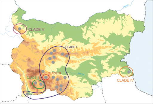 Geographical distribution of COI clades. Compare with Figure 3.