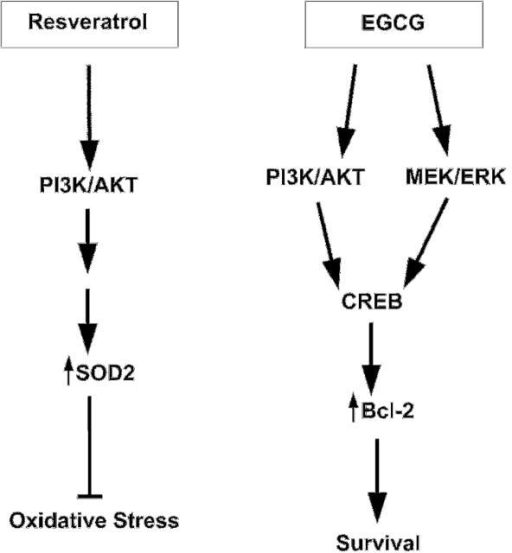 Modulation of pro-survival protein kinase pathways by nutraceuticals.