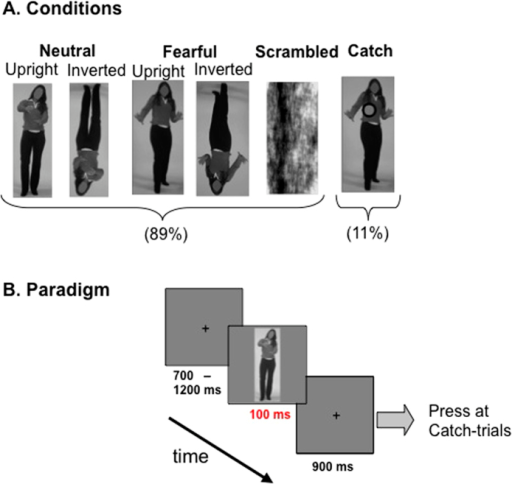 Experimental design.(A) Experimental conditions with examples of the visual stimuli. (B) Stimulus presentation paradigm. Subjects were instructed to make a button press at the appearance of a grey dot during Catch trials. Hence, the body stimulus and its emotional expression were task-irrelevant. Only trials without button press were analyzed.