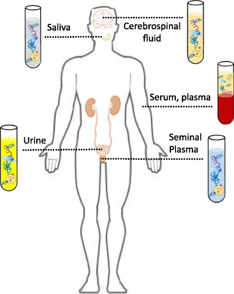 Circulating molecules can be detected in various biological fluids. Circulating molecules are present in a number of biological fluids, including urine, serum, plasma, cerebrospinal fluid, seminal plasma and saliva. These can be obtained using a liquid biopsy