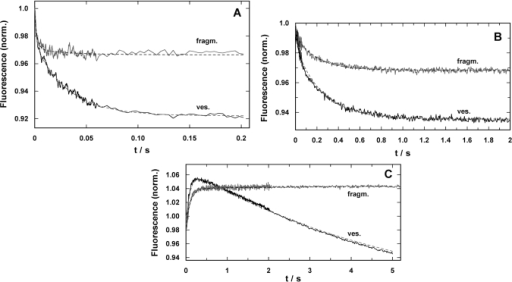 Time-resolved response of the fluorescence signal in concentration-jump experiments performed by UV-flash induced substrate release from a caged precursor with SR vesicles (ves.) and purified membrane fragments (fragm.). (A) pH jump ex-periment in the electrolyte that maintains the SR Ca-ATPase in its E1 conformation. The release of protons causes a right shift in the reaction sequence, E1 ↔ H2E1 ↔ H4E1 [5]. In both preparations the time course could be fitted with a sum of two expo-nential functions (Eq. 2). While the time constants were comparable, the amplitudes differed significantly, F1/F2(ves.) = 0.5 and F1/F2(fragm.) = 5. (B) Ca2+-concentration jump in the E1 conformation of the SR Ca-ATPase lead to a right shift in the reaction sequence, E1 ↔ CaE1 ↔ Ca2E1. Again, the fits of the data with Eq. (2) revealed comparable time constants, the ampli-tude ratios, F1/F2(ves.) = 0.28 and F1/F2(fragm.) = 0.21, were not to far from each other, however, the total fluorescence ampli-tude differed by more than a factor of 2. (C) ATP-jump experiments were performed under the condition that release of the nucleotide triggered the reaction, Ca2E1 → (Ca2)E1-P → P-E2(Ca2) → P-E2, and then all substrates are present to allow pump turnover, controlled by the rate-limiting step, P-E2 → P-E2H2 [22]. While the SR vesicles show a biphasic behavior the mem-brane fragments exhibit only the rising phase of the fluorescence with a time constant similar to that for the Ca-ATPase in the vesicles