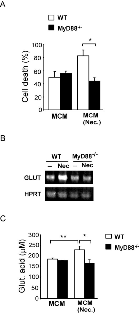 MyD88-dependent induction of neurotoxicity and glutaminase expression in microglia. (A) Neurotoxicity of MCM from wild type (WT) and MyD88-deficient microglia cultures either non-stimulated (MCM) or treated with necrotic HT22 neurons (MCM (Nec.)). (B) RT-PCR analysis of glutaminase expression of wild type or MyD88-deficient microglia treated or not treated with necrotic HT22 neurons. (C) Analysis of L-Glutamic acid levels in MCM of microglial cell cultures. Results are shown as mean ± SD and are representative of at least two experiments. *** p < 0.001 and * p < 0.05.