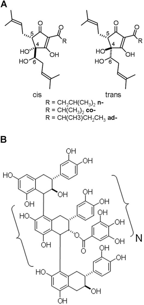 structural formula of a rho iso alpha acids from humulus lupulus l