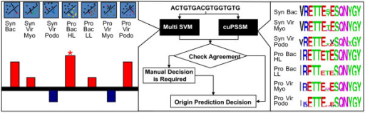 A summary of the psbA sequence classifier. Each sequence is classified by two independent approaches: multi-class SVM (left) and cuPSSM (right). In the multi-class SVM classifier, each sequence is represented by an oligonucleotide frequency vector (calculated in overlapping windows) and tested against seven different SVM classifiers (trained on culture and environmental data from GOS) [See Additional Files 1 and 2]. The sequence is classified based on the classifier in which it achieved the highest positive result. Independently, the sequence is aligned to a template psbA gene and scored against seven different cuPSSMs. The sequence is then classified based on the subgroup for which it achieved the highest score. Finally, the results of the two approaches are compared. Sequences for which the two independent classifiers converged are classified according to the common sub classification. In cases where no agreement exists, the sequence is further classified manually as described in the text.