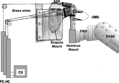 The experimental setup. SSP: M. supraspinatus; ISP-TM: M. infraspinatus and m. teres minor; SSC: M. subscapularis; UMS: ultrasonic measuring system; FMS: force moment sensor; RASS: robot-assisted shoulder simulator; FC-HC: force-controlled hydraulic cylinder; CS: control station.