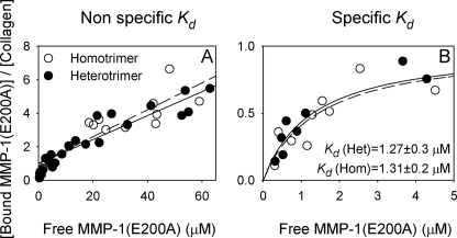 Equilibrium binding of MMP-1(E200A) to homo- and heterotrimeric mouse-tail-tendon type I collagen at room temperature. A, number (N) of bound MMP-1(E200A) at 10–65 μm concentration of free molecules was well fitted by a straight line with the intercept at N = 1. B, after subtracting this fitted low affinity binding, the number of MMP-1(E200A) bound below 5 μm was consistent with high affinity binding (Kd = 1.3 ± 0.3 μm) at a single site. Hom, homotrimer (dashed lines in A and B); Het, heterotrimer (solid lines in A and B).