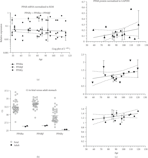 Stomach. (a) The expression of PPARα, β, and γ mRNA is shown across the fetal age range.  Log plot of mean ± SEM Ct is normalized to β-2-microglobulin (B2M).  (b) The fetal expression of PPARα, β, and γ is shown relative to expression in adult stomach.  Each symbol represents the mean Ct value of 2 replicates for each fetal (open circles) sample and adult (filled circles) individual replicates are shown (overall mean for each group is shown as a horizontal line).  (c)  PPARα, β, and γ protein expression is shown across the fetal age range.  Western blot density normalized to glyceraldehyde-3-phophate dehydrogenase (GAPDH).  Up arrowhead indicates PPARα, down arrowhead PPARβ, and diamond PPARγ.  If only one sample was available for a particular age, then an error term could not be calculated and no SEM bar is shown.  Regression analysis evaluated change with age. Dashed lines in graphs of C are the 95% confidence interval.
