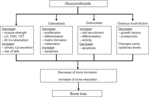 Effects of glucocorticoids on bone. Derived from.20,85Abbreviations: TST, testosterone; LH, luteinizing hormone; FSH, follicle-stimulating hormone; GI, gastrointestinal; Ca, calcium.
