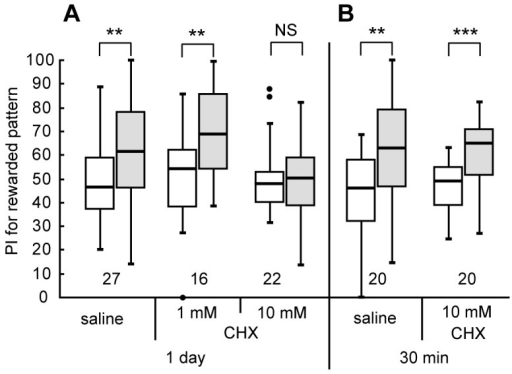 Effects of cycloheximide on formation of 1-day memory after visual pattern conditioning.(A) Three groups of animals were each subjected to injection of 3 μl of saline or saline containing 1 mM or 10 mM cycloheximide (CHX) at 20 min prior to 8-trial conditioning in which a visual pattern was paired with water reward. Relative preference between the rewarded pattern and control pattern was tested before and at 1 day after training. (B) Another two groups were each injected with 3 μl of saline or saline containing 10 mM CHX at 20 min prior to 8-trial visual conditioning. Relative preference between the rewarded pattern and control pattern was tested before and at 30 min after training. Preferences indexes (PIs) for the rewarded patterns before (white bars) and after (grey bars) training are shown as box and whisker diagrams and are statistically compared. The line in the box is the median and the box represents the 25-75 percentiles. Whiskers extend to extreme values as long as they are within a range of 1.5× box length from the upper or lower quartiles. Any data not included between the whiskers are plotted as outliers with dots. The results of statistical comparisons of visual pattern preferences before and after training are shown by asterisks (*** P<0.001, ** P<0.01, NS P>0.05, WCX test). The number of animals tested is shown at each data point in this figure and in subsequent figures.
