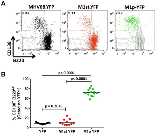 The majority of M1 promoter activity is detected in splenic plasma cells.C57Bl/6 mice were infected with 5×105 pfu/IN of the indicated virus and spleens were harvested at 14 days post infection. Cells were gated on CD3− population for analysis. (A) Representative plots show YFP marking (colored) overlayed on total CD3− population (gray) and are gated for plasma cells defined by CD138+B220Lo. (B). Compiled results from 3 experiments, with 3–5 mice per group, show the frequency of YFP+ cells with a plasma cell phenotype.