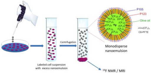 Schematic of nanoemulsion exposure to cells, followed by removal of excess nanoemulsion by centrifugation. Low density of C8-PFTE makes the nanodroplet removal easier when centrifuged with cells.
