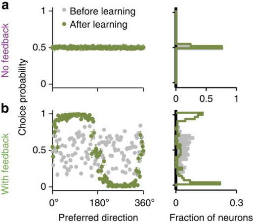 Association neurons in the network with feedback, but not in the network without feedback, exhibit choice-correlated fluctuations.(a) In the network without feedback, CP is close to 0.5 in all association neurons and does not change throughout learning. (b) In the network with feedback, CP is randomly scattered around 0.5 before learning (grey dots), but a bimodal profile of CP develops after a short period of learning (500 trials, green dots), such that CP>0.5 in neurons with preferred directions in category C1, and CP<0.5 in neurons with preferred directions in category C2. CP (y axis) is plotted for all association neurons labeled by their initial preferred direction (x axis) before (grey dots) and after (olive dots) learning. Histograms to the right show the corresponding CP distributions.