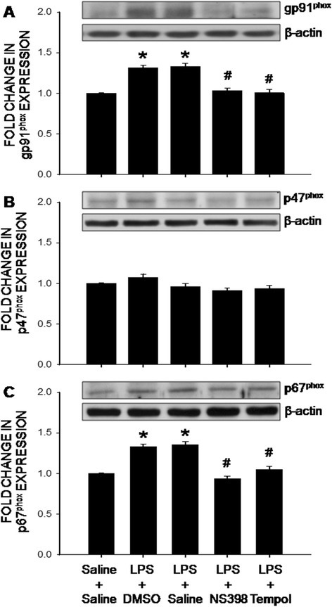 The COX-2-dependent upregulations of the NADPH oxidase subunits in the hippocampus after intraperitoneal LPS infusion. Representative gels (insert) and densitometric analysis of results from Western blot showing changes in expression of gp91phox (a), p47phox (b) and p67phox (c) in the hippocampus, measured on day 7 after intraperitoneal infusion via an osmotic minipump of saline or LPS (2.5 mg/kg/day) for 7 days alone or with additional intracerebroventricular infusion of NS398 (5 μg/μl/h, dissolved in 1 % DMSO), tempol (2.5 μg/μl/h, dissolved in saline) or the corresponding vehicle. Values are mean ± SEM, n = 8–10 rats per group. *P <0.05 vs. saline-treated group; #P <0.05 vs. LPS-treated group in the post hoc Scheffé multiple-range test