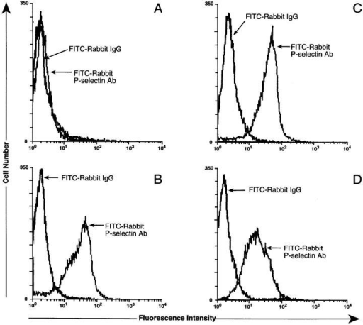 P-selectin antibody binding to sperm cells after acrosomal reaction or permeablization. Porcine sperm cells (2 × 106  cells per ml) without prior washing (A), without prior washing in  the presence of 5 μM A23187 (B), with prior repeated washing  (C), and without prior washing in the presence of 0.01% saponin  (D) were incubated with either FITC-labeled rabbit IgG or  FITC-labeled rabbit P-selectin antibody at 22°C for 1 h (all at 10  μg/ml). After washing, the cells were analyzed by flow cytometry  as above.