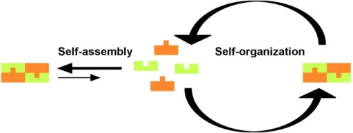 Self-assembly versus self-organization. In self-assembly, a set of components assembles into a stable, static structure that reaches a thermodynamic equilibrium. In self-organization, a set of components assembles into a steady-state, dynamic structure.