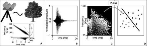 Summary of the materials and methods.(A) The basic setup of the experiments, in which a sonar head on a tripod was used to ensonify plants. The emitted signal's spectrogram is presented with the time signal under it and the frequency dependent intensity curve on the right. (B) An example of a time domain back scatter recorded from a single apple tree. The amplitude is in arbitrary units. (C) The spectrogram of the time domain signal of B, created after cutting the echo out of the time signal. The spectrogram's frequency range was cut between 120–25 kHz, and it was threshold leaving only the regions that are high above noise. (D) An illustration of the classification by SVMs. Following PCA, each spectrogram is represented by a 250-dimentional data point (shown in the figure as a 2-dimentinal point) belonging to one of two classes (circles or rectangles). The SVM then learns the best hyperplane for the training data. The data points that are closest to the hyperplane (denoted as full shapes) are called the support vectors and define the orientation of the hyperplane.
