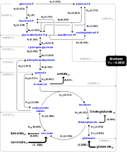 Metabolic network of the central metabolism of Bacillus subtilis utilizing glutamate and succinate as co-substrates. All flux values denoted in parentheses were generated by obeying the given stoichiometry. Effluxes and biomass yield were measured experimentally. The symbol 'ν' indicates the flux, the subscript 'r' the reverse flux of the bidirectional flux pair, the subscript 'ex' extracellular pools of substrates and products and YXS the biomass yield in g(biomass)/mmol(glutamate). All flux values are normalized by the glutamate uptake rate.