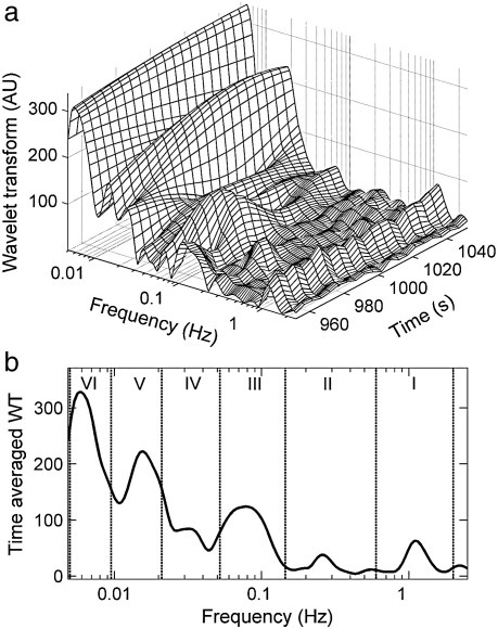 (a) The wavelet transform of an LDF skin blood flow signal, illustrating the presence of distinct spectral peaks whose frequencies and amplitudes vary in time. The wavelet coefficients, presented in the time–frequency domain, were calculated from the basal flow of a healthy subject at rest. Only a short time section of the transform is presented. (b) A time-average of the wavelet transform showing the division of the frequency scale into six intervals.