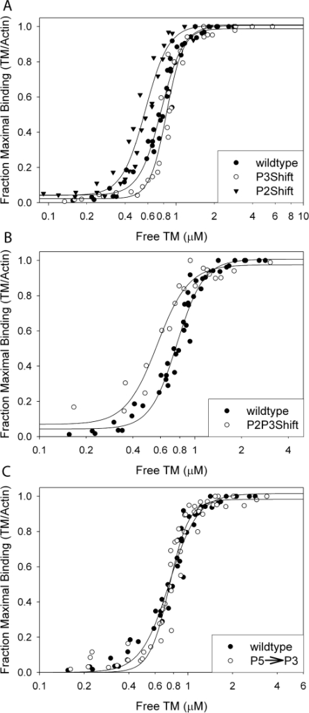 The effect the mutations on the actin affinity measured by cosedimentation with F-actin.Binding to filamentous actin. Tropomyosin (0.1–10 µM, depending on the tropomyosin) and 0.12–12 µM troponin T70–170 [44] were combined with 5 µM actin and sedimented at 20°C in 250 mM NaCl, 10 mM TrisHCl, pH 7.5, 2 mM MgCl2, and 0.5 mM DTT. Stoichiometric binding of 1 tropomyosin: 7 actins is represented by the 1.0 fraction of maximal binding. The apparent Kapps are reported in Table 2. A. Symbols: •, wildtype; ○, P3Shift, ▾, P2Shift. B. Symbols: •, wildtype; ○, P2P3Shift. C. Symbols: •, wildtype; ○, P5→P3. The mutations affect the affinity and cooperativity of binding.