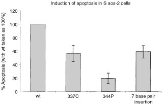 Induction of apoptosis. The pC53-SN3 plasmid containing the p53 insert of interest was transfected into Saos-2 cells, which were washed after 16 h and reincubated for 72 h. The results show that the 7 base pair mutation retained about 65% of the apoptotic ability of WT p53. 344P, the non-functional mutant only retained about 20% apoptotic ability. Statistical analysis showed that the 7 base pair mutation was significantly different from both 344P and WT, with P<0.02.