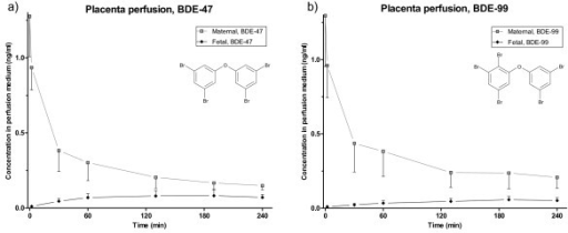 Placenta perfusion of BDE-47 and BDE-99. Concentration (ng/ml) and standard deviation of four hour placenta perfusions of a) BDE-47 and b) BDE-99 after addition of 1 ng/mL of each congener to the maternal compartment at t = 0. (0-60 min: n = 5; 130-240 min: n = 4).