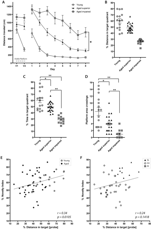 Performance on OLM correlates with performance on the MWM probe trial.(A) Task acquisition on the MWM in young and aged rats, four trials per day. The first eight trials (Days 1 & 2) represent the visual version of the task. Young animals learn the task quickly, although aged superior learners learn the task soon afterward. Aged impaired learners do not show high acquisition of the task. Asterisk indicates a significant difference of AI and SL performance on the MWM over time. (B) Percent of total swim distance spent in target quadrant during probe trial (Day 10) was the criterion by which animals were grouped into SL, AI, or intermediate. Both young and SL animals cover >40% of their total swim distance in the target quadrant. AI animals perform close to the chance level (25%). (C) Percent of total time spent in the target platform during probe trial show significant differences performance between SL, AI and young rats. (D) Platform crossings during probe trial show statistical differences in performance between SL, AI and young rats. (E) Individual novelty index on OLM2 significantly correlates to performance on the probe trial of the MWM when young (grey circles) and aged groups (black diamonds) are included (n = 55, young, SL, AI, and intermediate animals included). [Young, n = 15; SL, n = 22; AI, n = 11, and intermediate, n = 7, as defined by % total target swim distance]. (F): Correlation analysis for the aged rats. Grey diamonds indicate animals that were categorized differently in OLM2 and MWM, or were classified as intermediate on both. For details on these groups of animals, please refer to Tables 2 and 3.