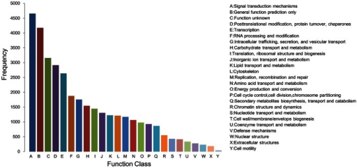 KOG functional classifications of the Capsicum annuum L. anther transcriptome.