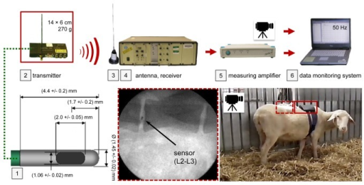 Methology of the in vivo experiment.Activities of the sheep were monitored by video and the experimental staff. The two identical pressure sensors [1] were connected to a telemetry transmitter [2] carried by the experimental animal inside a backpack. The signal was transferred wirelessly to the receiver, passed a measuring amplifier and was collected together with the footage in a data monitoring system at a rate of 50 Hz.
