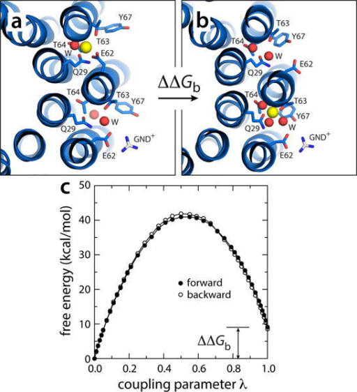 Electrostatic barrier between the P and N-channels. (a) A snapshot was extracted from one of the simulations in which Na+ is spontaneously released (Fig. 5), and the exposed glutamate side-chain was paired to a guanidinium ion (GND+), modeled in to represent the interaction with the key arginine side-chain on TM4 of subunit-a. (b) The free-energy cost of transferring a bound Na+ from the adjacent site, counter-clockwise, to the site engaged to the GND+ ion, was then computed, by gradually decoupling the ion from its environment in configuration (a) and re-coupling it in configuration (b). (c) Free-energy change as a function of the (de)coupling parameter λ. The transfer free energy was calculated in both directions. The c-ring is represented as in Fig. 1. Side-chains and water molecules in the site are highlighted (sticks, spheres). Hydrogen atoms as well as other protein side-chains and all MPD/water molecules are omitted for clarity.