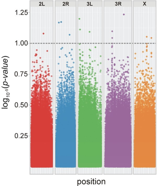 Genome-wide survey for SNPs implicated in IGEs for focal male tapping behavior. Points above the dashed line represent SNPs with a significance level of P < 1 × 10−5. Some datapoints above the threshold represent more than one SNP position that are located in close proximity; there were 13 significant SNPs in total.