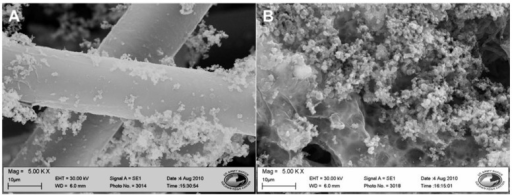 SEM images of fibers with polymer coating at 5,000× magnification. (A) 3TAA concentration of 10 mg/mL. A smooth conformal polymer coating was observed along the individual fibers with minimal polymer clusters. (B) 3TAA concentration of 100 mg/mL. The coating is rough, with a large amount of polymer built up along the surface, engulfing several fibers and reducing the porosity of the membrane.