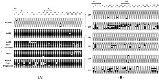 BGS high-resolution mapping of the methylation status of each CpG site (ovals) in the ADAMTS18 gene promoter region. (A) BGS results for the HEK293, A498 and Ketr-3 cell lines; and (B) BGS results for the ccRCC primary tumors (T) and adjacent normal tissues (N). The rows represent the individual alleles of the ADAMTS18 gene promoter that were analyzed. The arrows indicate MSP primer sites. The black circles indicate methylated sites, while the white circles indicate unmethylated sites.