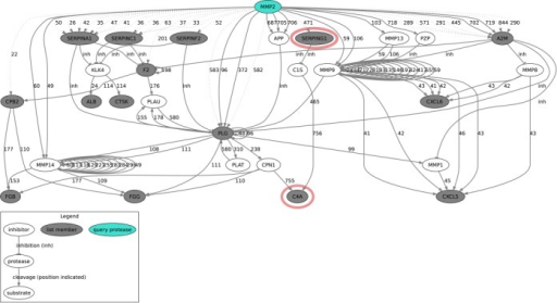 Fragment of the graphviz figure of protease web connections identified by PathFINDer. Nodes are proteins, the query protease is marked in color and the proteins from the submitted list are gray. Edges are cleavages (arrows, with numbers for the position of the cleavage) or inhibitions (T shaped arrows, labeled as 'inh'). Edges from TopFIND are solid and edges inferred from the list are dotted. Nodes from the complement system are marked with red.