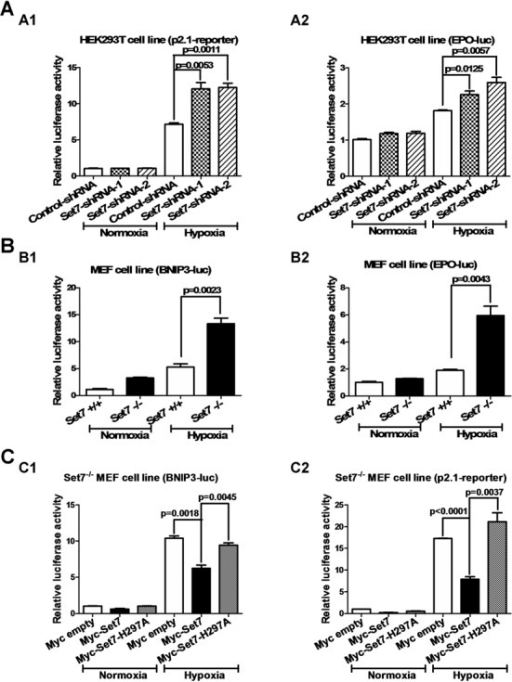 Depletion of Set7 enhances HIF-1α transactivity. (A) (A1) The knockdown of Set7 by Set7-shRNA-1 or Set7-shRNA-2 in HEK293T cells significantly enhanced the activity of p2.1 reporter under hypoxic condition (P = 0.0053 or P = 0.0011, respectively). (A2) The knockdown of Set7 by Set7-shRNA-1 or Set7-shRNA-2 in HEK293T cells significantly enhanced the activity of EPO promoter luciferase reporter under hypoxic conditions (P = 0.0125 or P = 0.0057, respectively). (B) (B1) The activity of BNIP3 promoter luciferase reporter was enhanced in Set7- MEF cells (Set7−/−) compared with that in the wild-type Set7 MEF cells (Set+/+) under hypoxic conditions. (B2) The activity of EPO promoter luciferase reporter was enhanced in Set7- MEF cells (Set7−/−) compared with that in the wild-type Set7 MEF cells (Set+/+) under hypoxic conditions. (C) (C1) The overexpression of the wild-type Set7 but not the mutant Set7 (H297A) in Set7- MEF cells (Set7−/−) inhibited the activity of BNIP3 promoter luciferase reporter. (C2) The overexpression of the wild-type Set7 but not the mutant Set7 (H297A) in Set7- MEF cells (Set7−/−) inhibited the activity of p2.1 reporter. Data were presented as mean ± SEM of three independent experiments performed in triplicates; statistical analysis was performed using GraphPad Prism 5.0 (unpaired t-test).