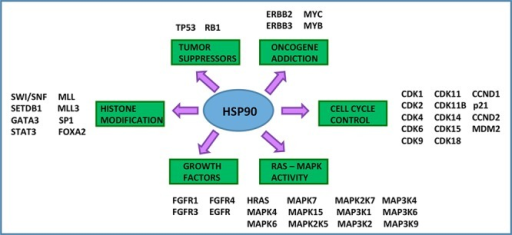 Hsp90 is a central hub to bladder cancer signalingHsp90 is a critical signaling hub in the etiopathogenesis of urothelial carcinoma. Hsp90 clients include tumor suppressors, oncogenes, growth factors, cell cycle regulators, histone modifying enzymes, and signal transducers [21, 49–55, 57, 58, 60–62]. All of the listed genes are subject to mutation, gene amplification, or deletion in urothelial carcinoma and are Hsp90 client proteins.
