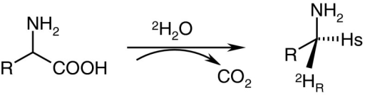 The stereochemistry of the enzymatic decarboxylation of α-amino acids