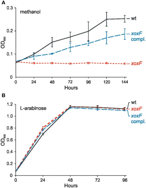 Effect of the xoxF mutation on growth of P. aminophilus JCM 7686 on methanol (A) and L-arabinose (B). wt, wild type; xoxF, xoxF insertional mutant; xoxF compl., xoxF insertional mutant complemented with a copy of the xoxF gene cloned in pBBR1MCS-3. The values are means of three replicates, and the error bars indicate the standard deviations.