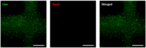 Cell viability after printing by live/dead staining (scale bar, 500 μm).