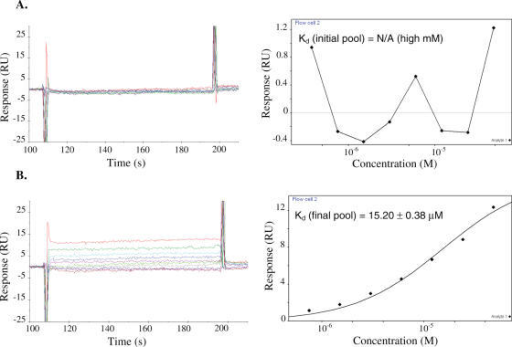 Concentration-dependent codeine-binding responses (left) and the corresponding equilibrium binding curve (right) of (A) the initial pool and (B) the enriched final pool. Codeine was coupled to the sensor chip as described. Serial dilutions of the appropriate RNA sample were injected across the sensor surface and binding responses were recorded over time. Kinetic rate constants were determined by examining the rate of change of binding response when the RNA samples were initially injected over the surface until equilibrium responses were reached (kon) and when a solution lacking the RNA sample was injected over the surface once equilibrium levels were bound to the chip surface (koff). Equilibrium binding constants (Kd) were determined by plotting the equilibrium binding response versus the RNA sample concentration and calculating the corresponding RNA concentration at which half of the maximal response was achieved. Binding responses were adjusted for background binding by subtracting responses of the corresponding RNA samples determined from a trenbolone-coupled sensor surface.