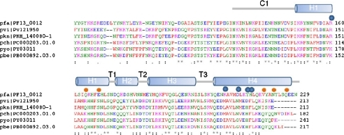 Sequence alignment of PfUIS3 with homologs from malaria parasites. pfa, Plasmodium falciparum; pvi, Plasmodium vivax; pkn, Plasmodium knowlesi; pch, Plasmodium chabaudi; pyo, Plasmodium yoelii; pbe, Plasmodium berghei. The sequence alignment is for the soluble region of UIS3, which is exposed to the hepatocyte cytoplasm. The structural features are indicated above the sequence. The orange dots and blue dots above the sequence highlight residues involved in PE head group interactions and in lining of the hydrophobic cavity.