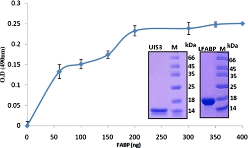 "Binding of PfUIS3130-229 to human LFABP. Protein-protein based ELISAs were performed as described under ""Experimental Procedures."" Each experiment was performed in quadruplicate, and an average of four experiments was plotted after deducting the background signal from the negative control (Gelatin). The standard deviations were less than 10% in all cases. SDS-PAGE of purified PfUIS3 and LFABP used in these ELISAs are shown as insets in the figure."