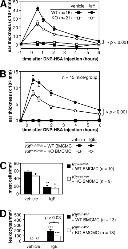 Mast cell–expressed mCCRL2 is required for maximal tissue swelling and numbers of dermal leukocytes in PCA. (A) WT or CCLR2 KO mice were sensitized by injection of 50 ng of anti-DNP IgE into left ear skin (with vehicle injection into right ear skin as the control). The mice were challenged by i.v. injection of DNP-HSA (200 μg/mouse) the next day, and ear swelling was measured at the indicated time points (mean ± SEM; n = 3 experiments with a total of 21 KO and 16 WT mice per group). *, P < 0.005 by ANOVA comparing swelling in WT vs. KO ears sensitized with antigen-specific IgE. (B–D) The ears of mast cell–deficient KitW-sh/Wsh mice were engrafted with BMCMCs from either WT or mCCRL2 KO mice. 6–8 wk later, the mice were sensitized (5 ng IgE/left ear, with vehicle into the right ear as the control), challenged with specific antigen (200 μg DNP-HSA i.v.), and assessed for tissue swelling (B), as described in A, and for numbers of mast cells (C) or leukocytes (D) per millimeters squared of dermis. Data are shown as mean ± SEM, n = 3 experiments, with 15 total mice per group in B, and the numbers of mice sampled for histological data are shown in C and D. *, P < 0.001 by ANOVA comparing swelling in mCCRL2 KO BMCMC- vs. WT BMCMC-engrafted ears sensitized with antigen-specific IgE. (C) Enumeration of mast cells present in the dermis of ear skin in engrafted animals from B after elicitation of PCA (IgE) or in vehicle-injected control (vehicle) ears. **, P < 0.005 by Student's t test versus values for the vehicle-injected ears in the corresponding WT BMCMC- or KO BMCMC-engrafted KitW-sh/Wsh mice. (D) Numbers of leukocytes per millimeters squared of dermis, assessed in formalin-fixed paraffin-embedded hematoxylin and eosin–stained sections of mice from B and C. ***, P < 0.0001 by the Mann Whitney U test versus corresponding values for the vehicle-injected ears in WT BMCMC- or KO BMCMC-engrafted KitW-sh/Wsh mice. The numbers over the bars for vehicle-injected mice are the mean values.