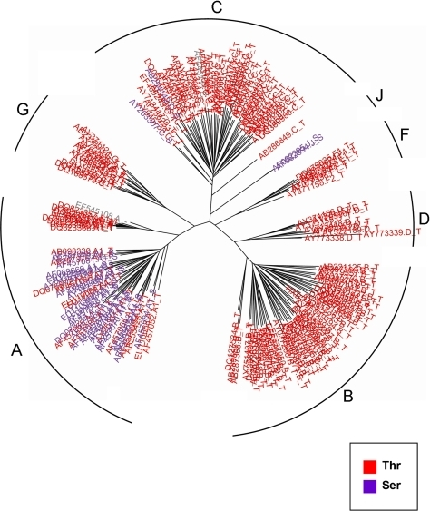 The rate-shifting pattern at site 34 of Rev, displayed on the phylogenetic tree of all seven subtypes.Each leaf (HIV-1 sequence) is color-coded according to the amino-acid it encodes at this position. Each leaf is labeled by its accession number, subtype (A, B, C, D, F, G, or J), and the encoded residue. The different subtypes are marked at each subclade of the tree. This site is part of the RRE binding domain.